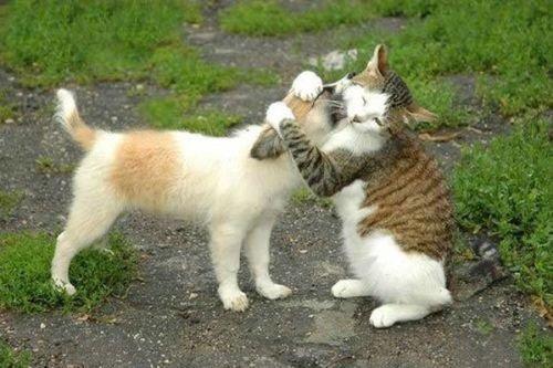 baciabbracci