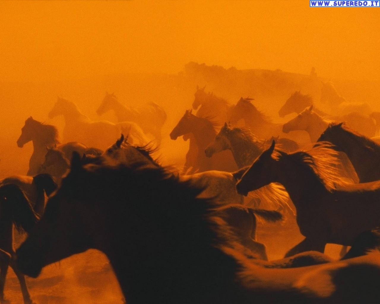 cavalli-11