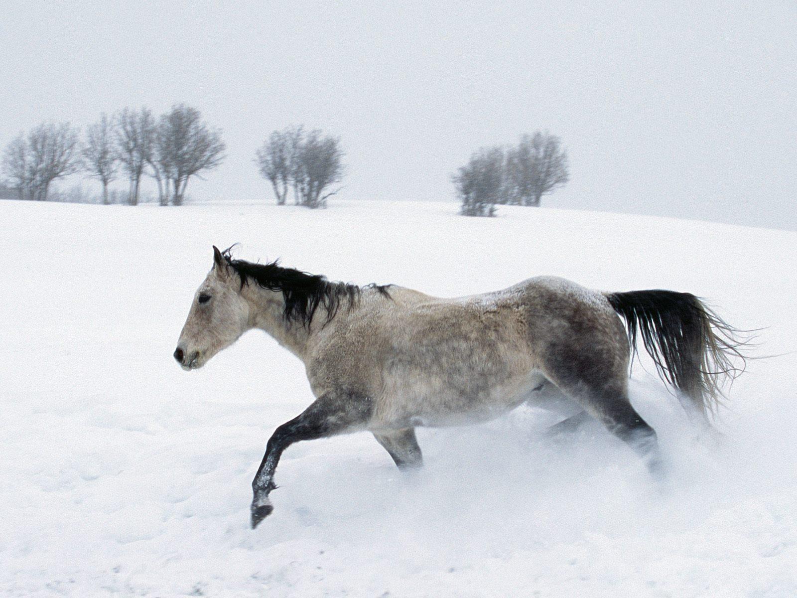 cavalli-22