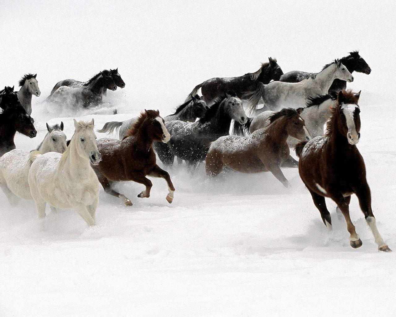 cavalli-23