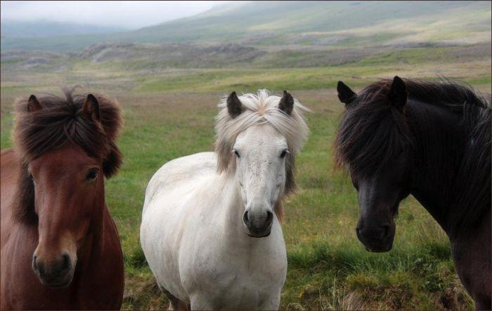 cavalli-24