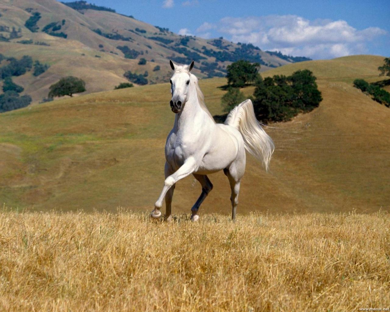 cavalli-25