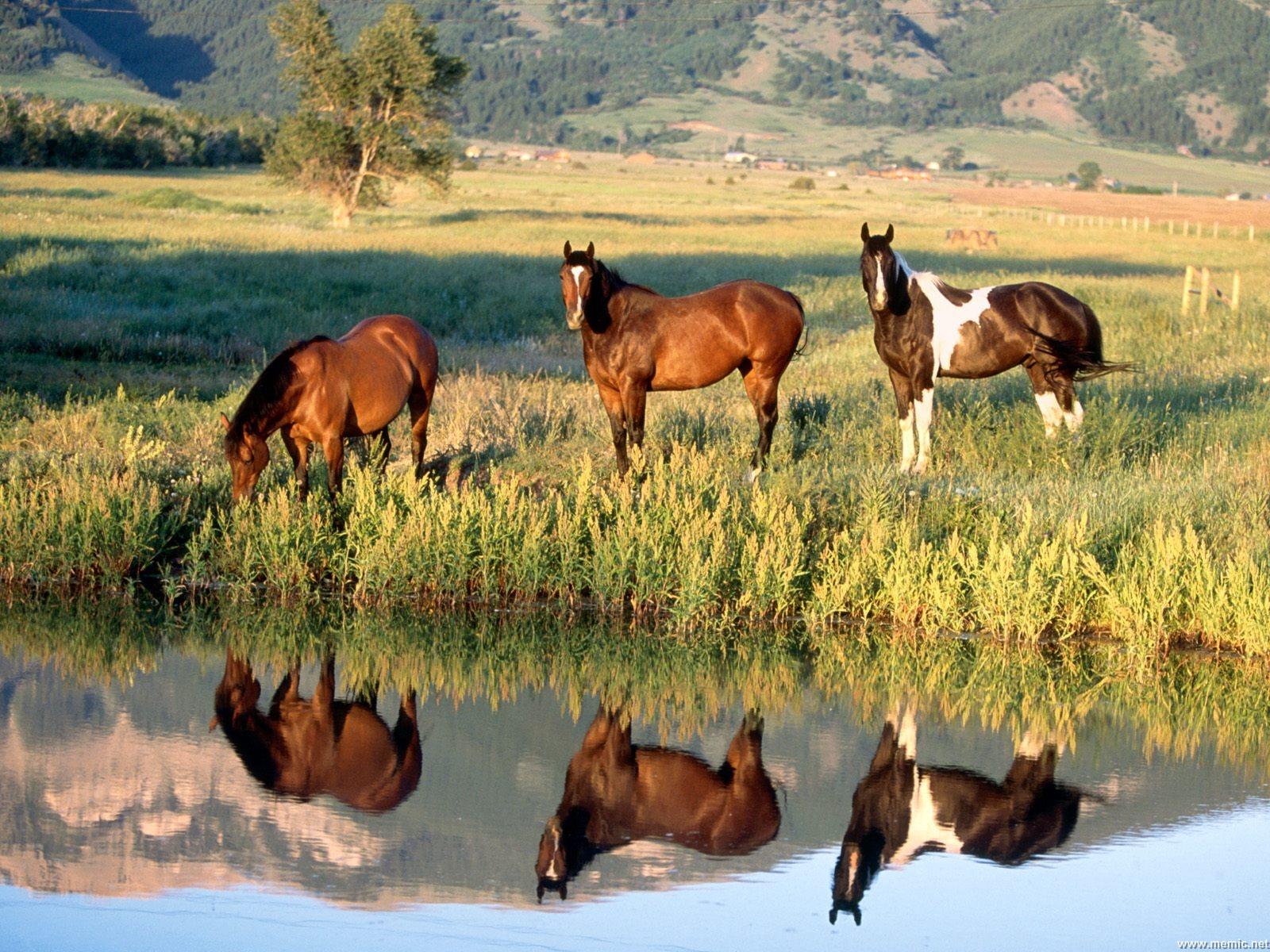 cavalli-27