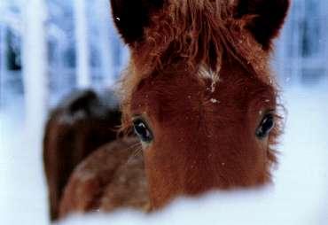 cavalli-31