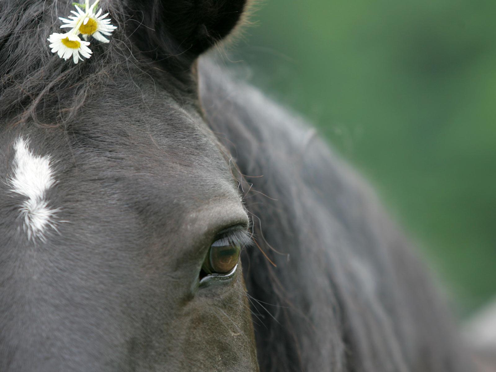 cavalli-32