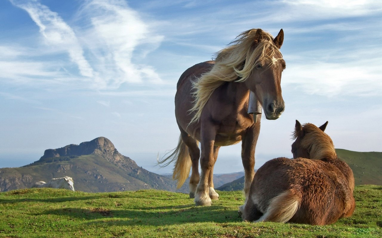 cavalli-33