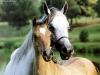 cavalli-14