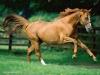 cavalli-16