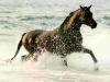 cavalli-17