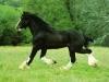 cavalli-18