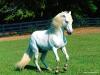 cavalli-21