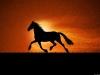 cavalli-26