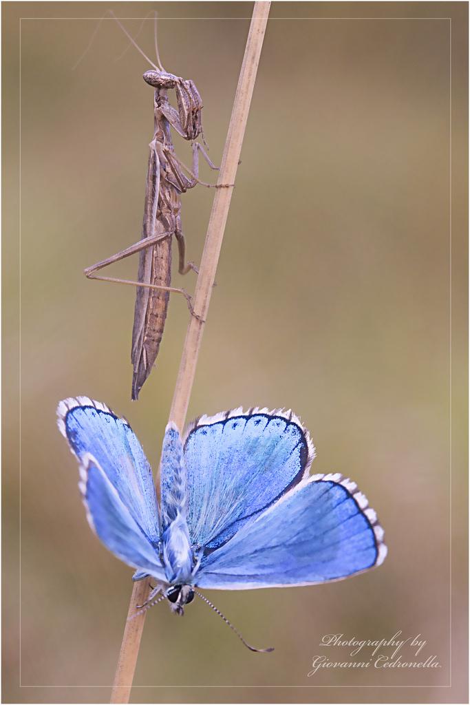 farfalle-103