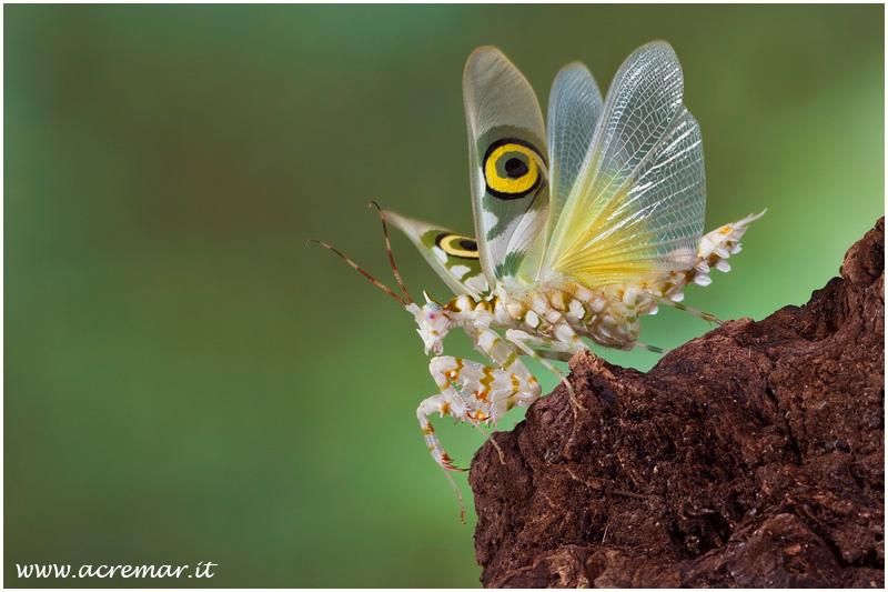 farfalle-105