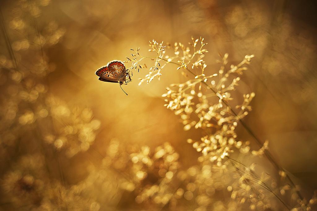 farfalle-106