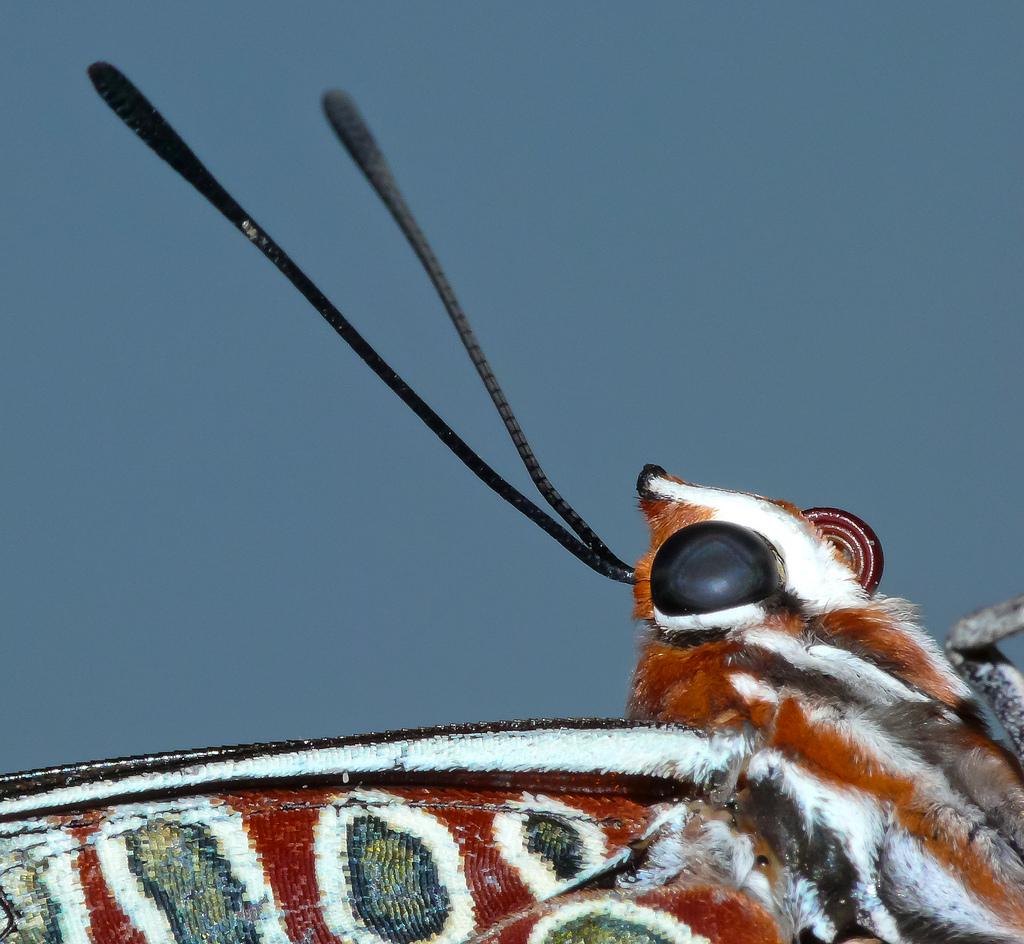 farfalle-107