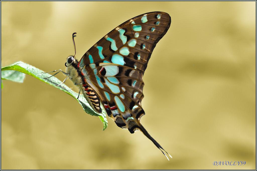 farfalle-109