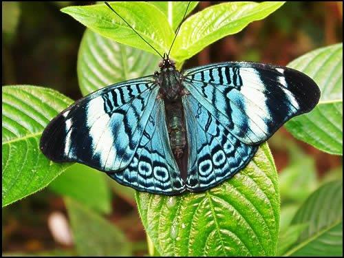 farfalle-11