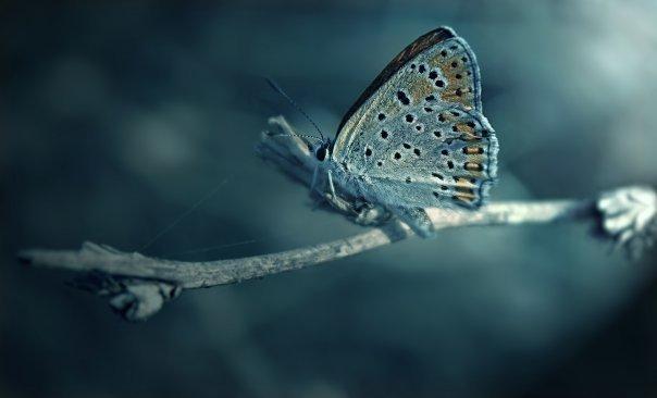 farfalle-115