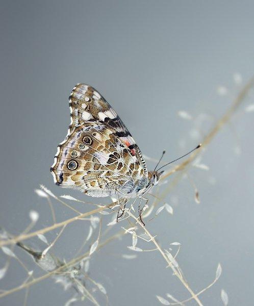 farfalle-116