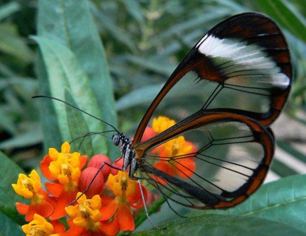 farfalle-118
