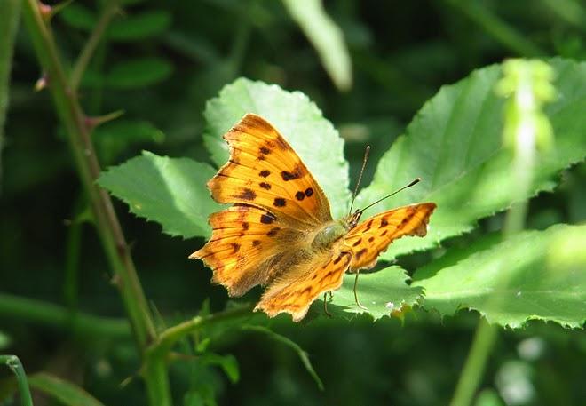 farfalle-12