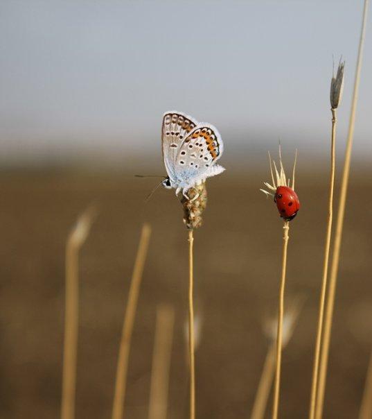 farfalle-14