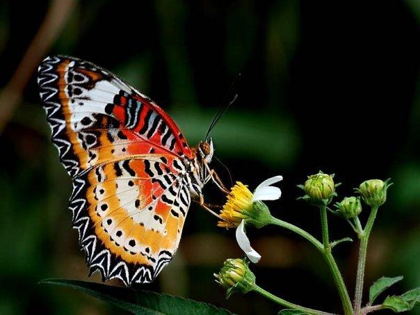 farfalle-15