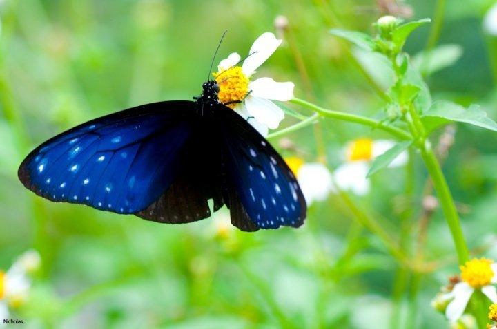 farfalle-17