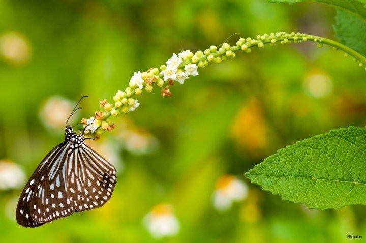 farfalle-18