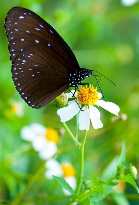 farfalle-19