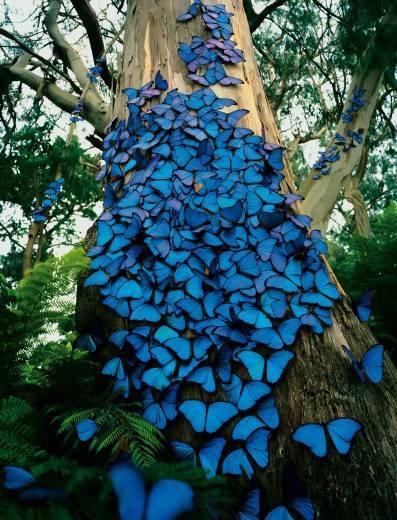 farfalle-2