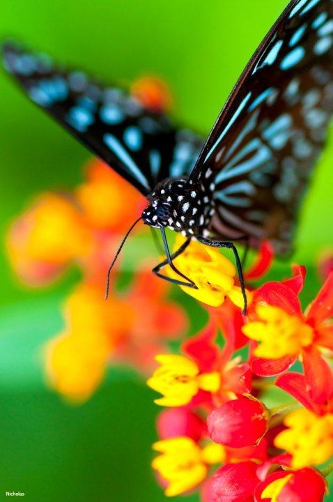 farfalle-20