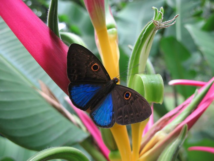 farfalle-23