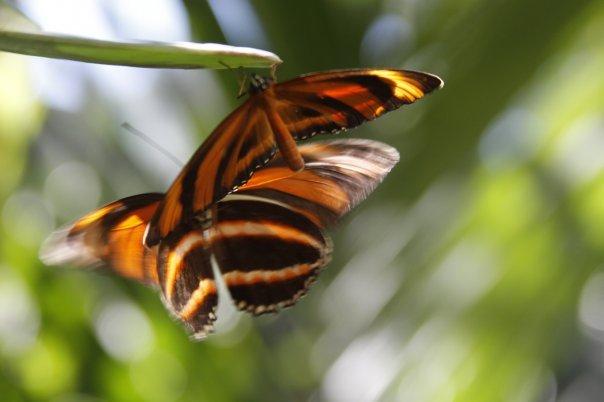 farfalle-24