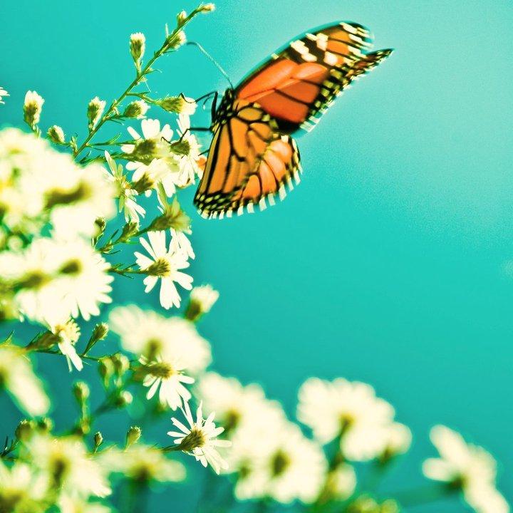 farfalle-26