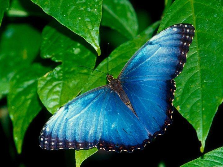 farfalle-27
