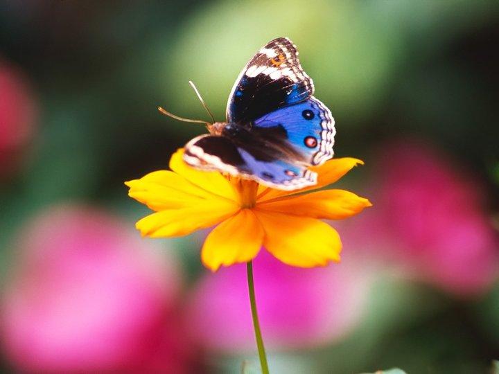 farfalle-28