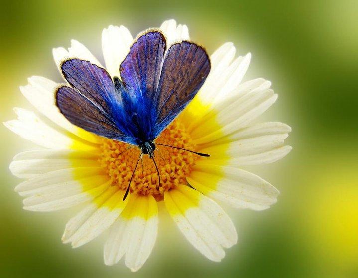 farfalle-30