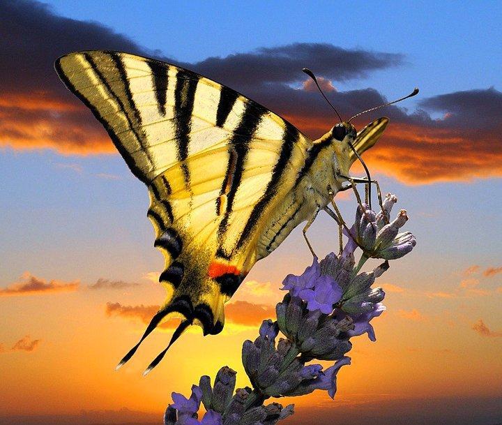 farfalle-31