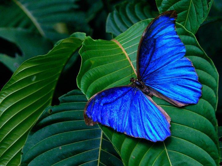 farfalle-32