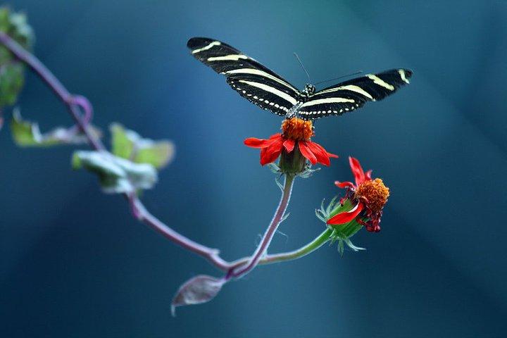 farfalle-34