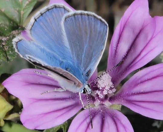 farfalle-36