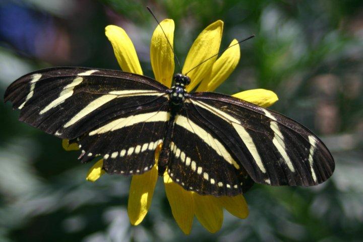 farfalle-37