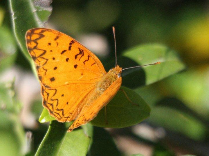 farfalle-39