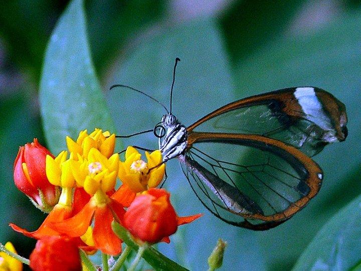 farfalle-42