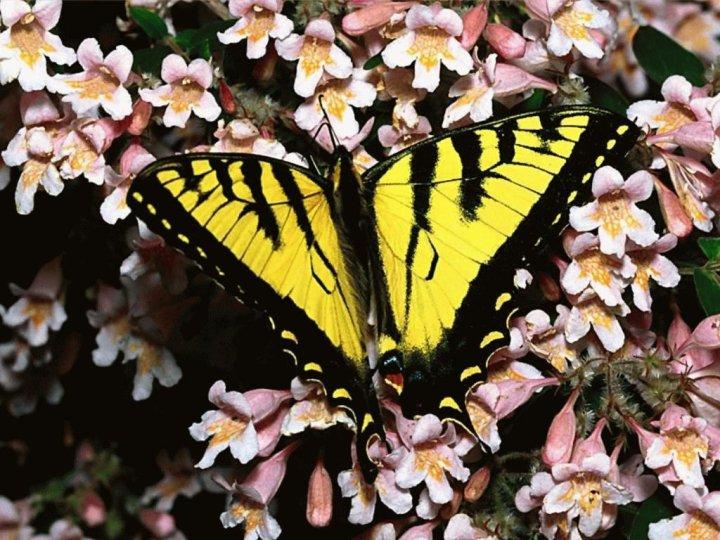 farfalle-44