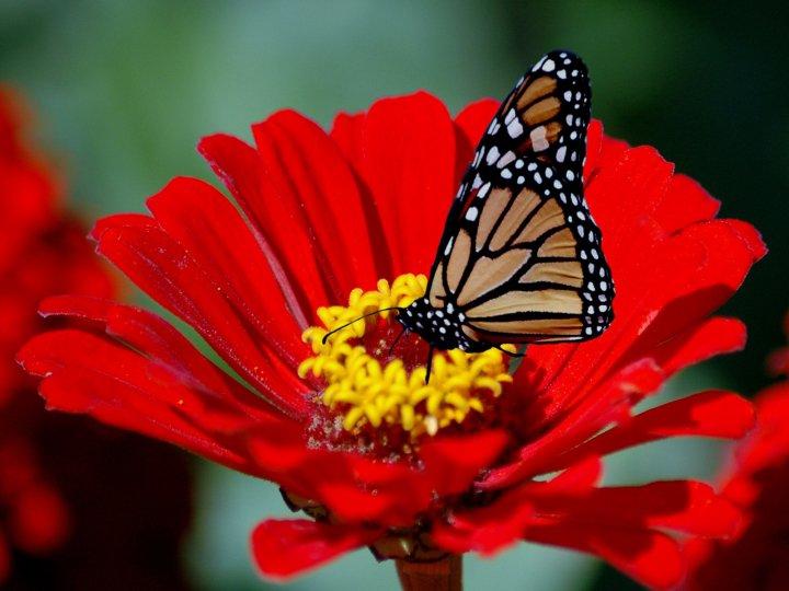 farfalle-45