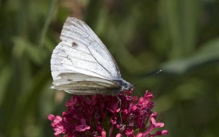 farfalle-46