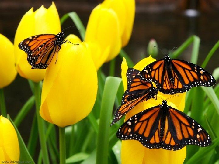 farfalle-47